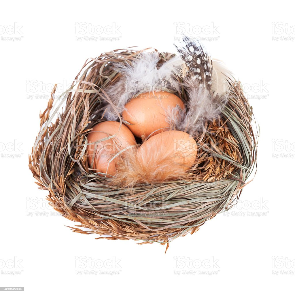 Nest with Eggs isolated on white stock photo