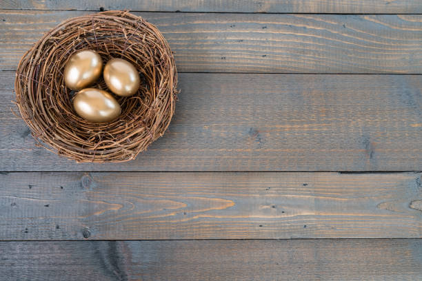 nest with golden eggs - ira stock photos and pictures