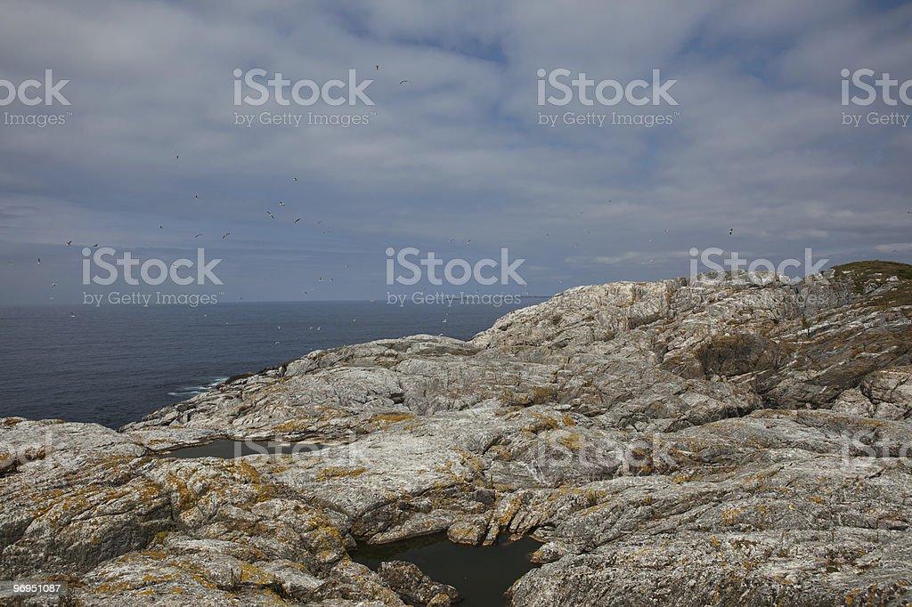 Nesting Cliff royalty-free stock photo