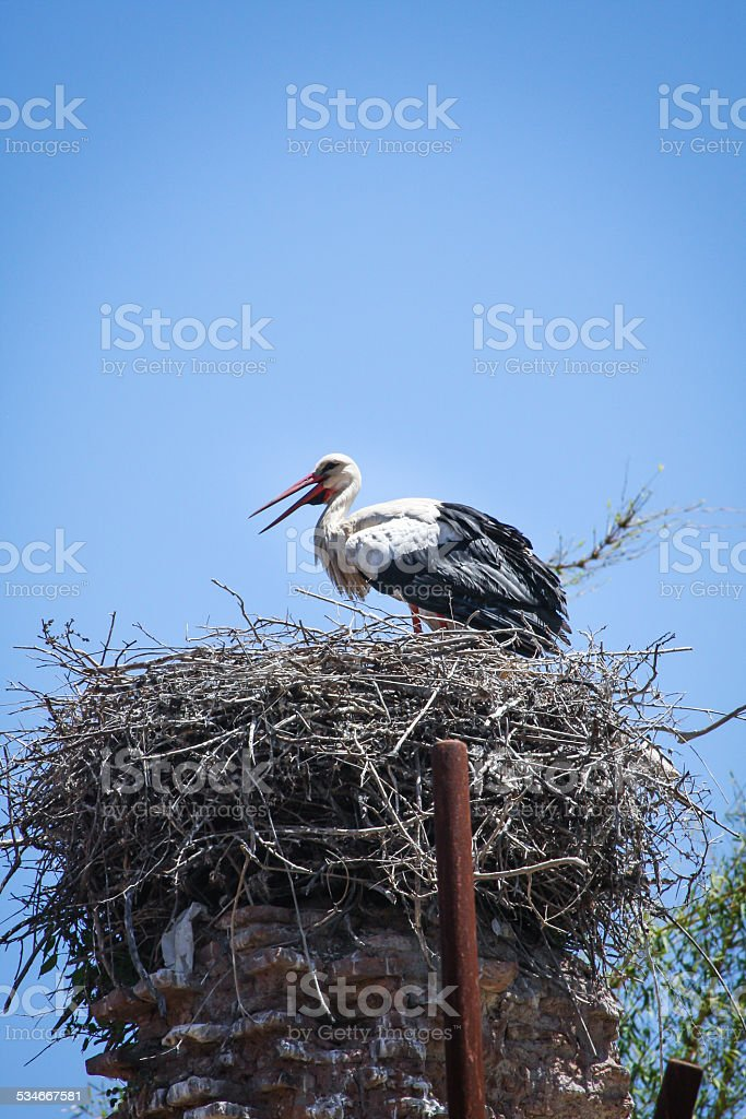 Nesting stork stock photo