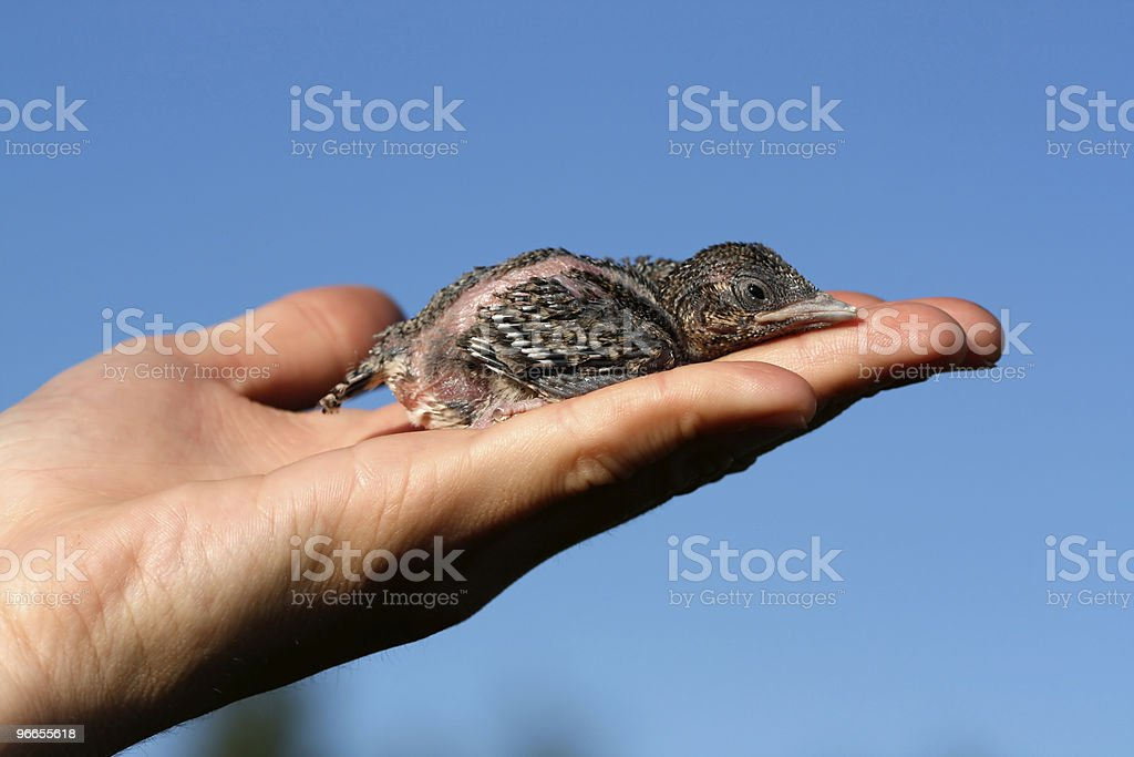 nestling on the hand royalty-free stock photo