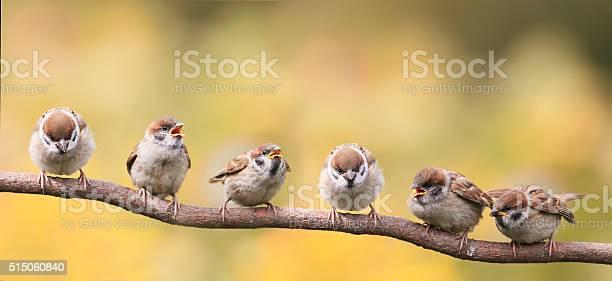 Nestlings of a sparrow sitting on a tree branch picture id515060840?b=1&k=6&m=515060840&s=612x612&h=vni8qpwyldx0hf9eddrmoy3qbxdsldpr4rum5petjbq=