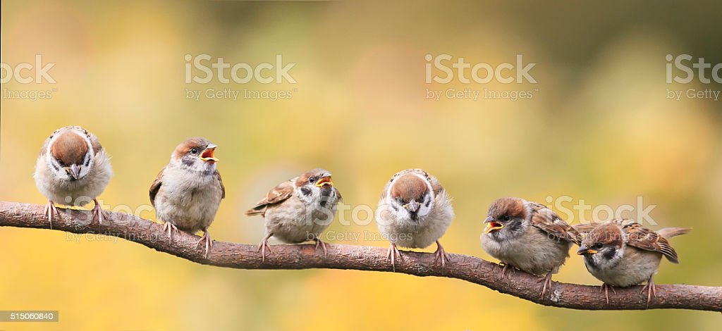 nestlings of a Sparrow sitting on a tree branch stock photo