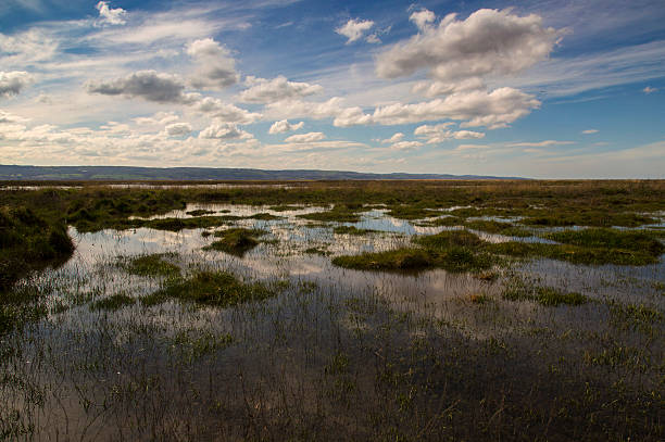 Neston Marshes stock photo