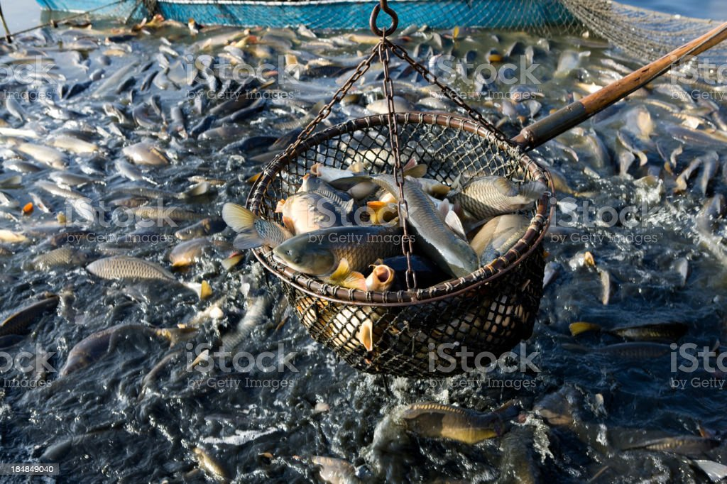 net of fishes stock photo