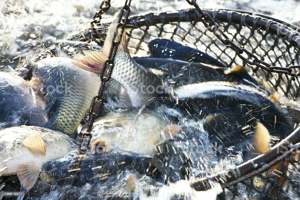 net of fishes royalty-free stock photo