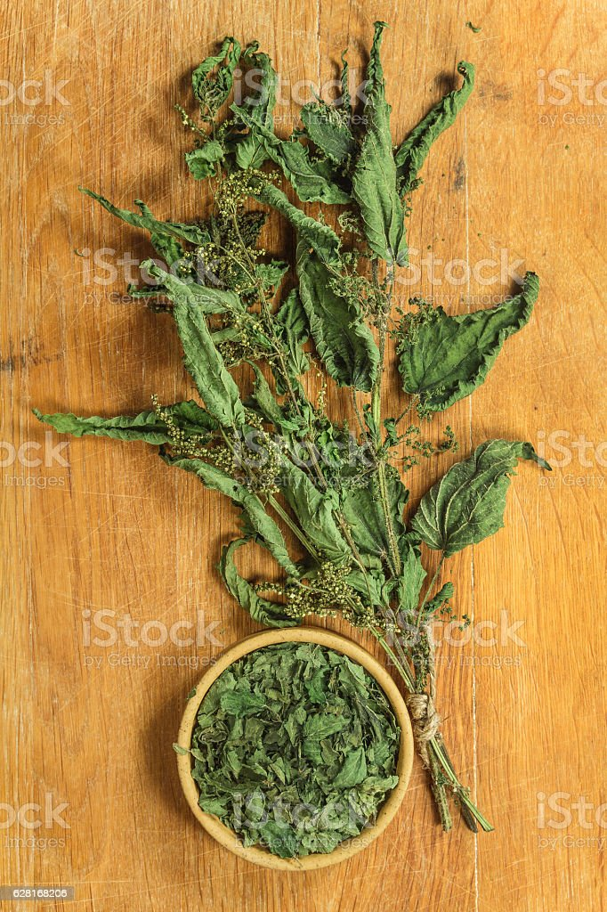 Nettle. Dried herbs. Herbal medicine, phytotherapy medicinal her stock photo