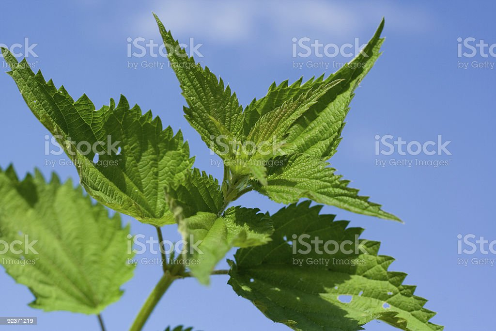 Nettle on background of sky royalty-free stock photo
