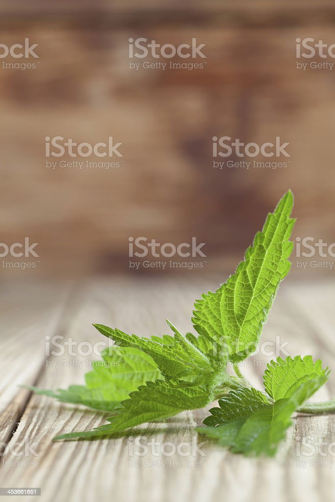 Nettle royalty-free stock photo