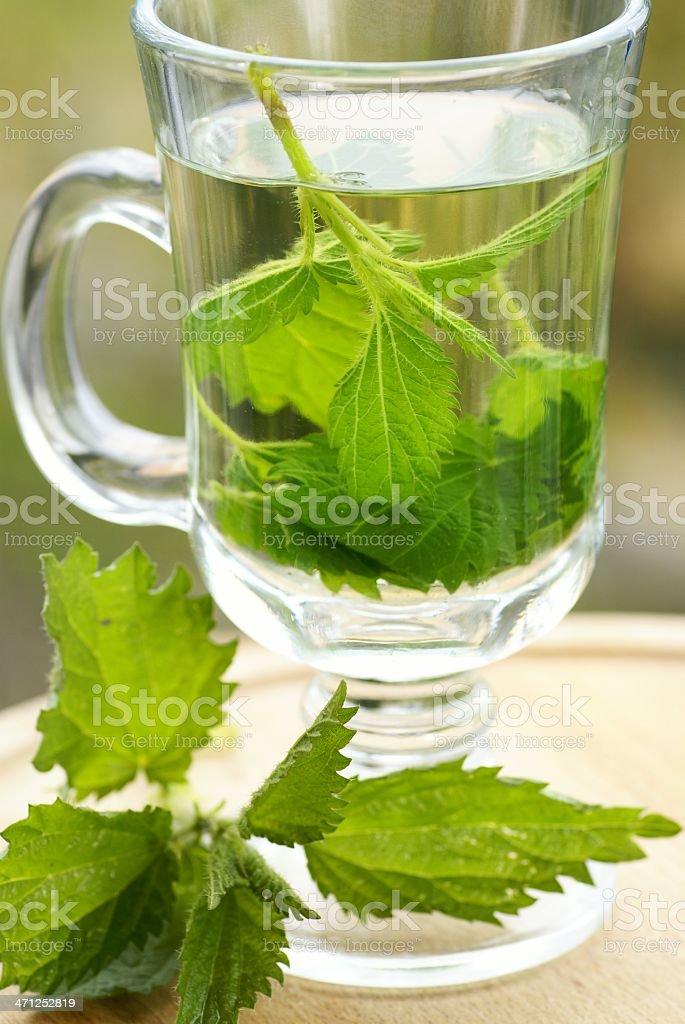 Nettle tea royalty-free stock photo