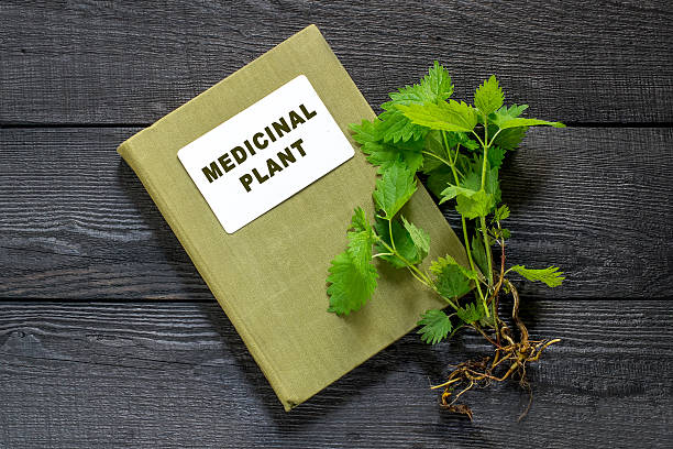 Nettles and directory medicinal plant Medicinal plant nettle (Urtica dioica) and herbalist handbook on the old wooden table. It is used in food preparation and production of fabrics antifebrile stock pictures, royalty-free photos & images