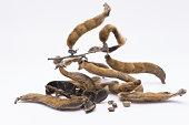 nettles brown pods (Mucuna pruriens) on white background