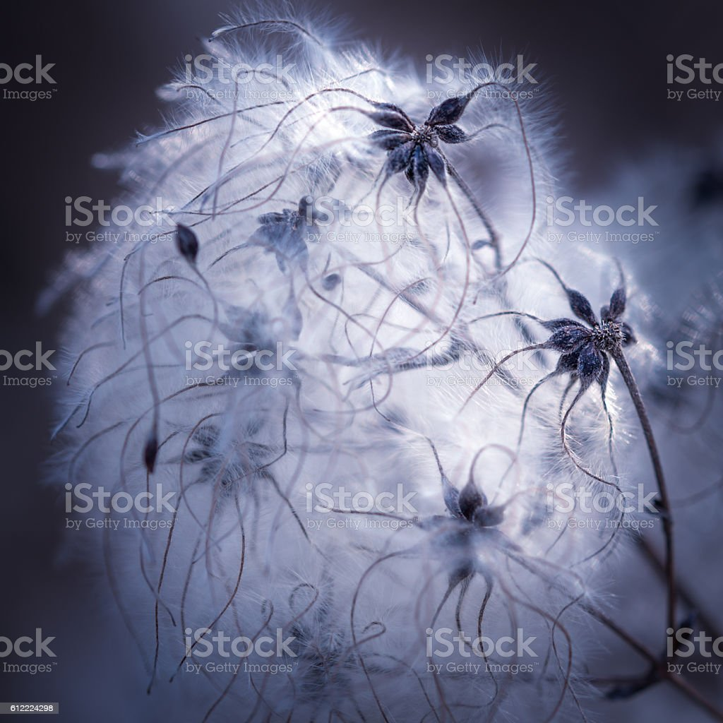 Network by nature stock photo