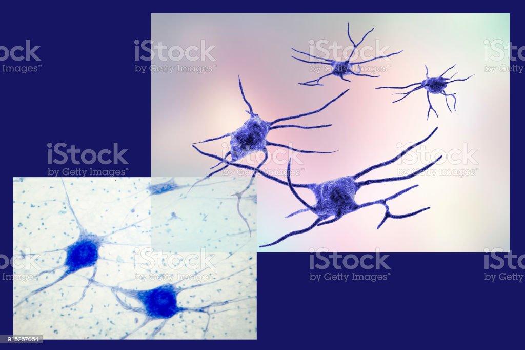 Fotografía de Neurona Células Cerebrales y más banco de imágenes de ...