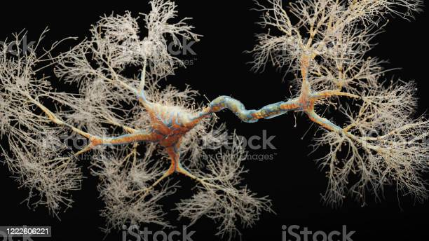 Neuron Cell Closeup View Stock Photo - Download Image Now