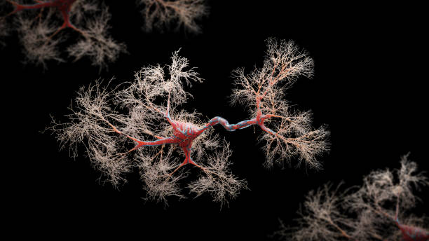 Neuron cell close-up view Neuron cell close-up view - 3d rendered image of Neuron cell on black background. SEM view  interconnected neurons synapses. Abstract structure conceptual medical image.  Synapse.  Healthcare concept. als stock pictures, royalty-free photos & images