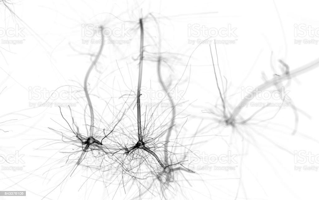 Neuron cell network on white stock photo