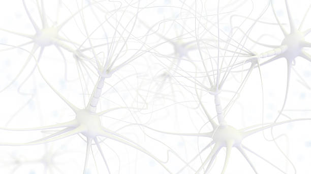 Neuron cell network Neuron cell network - 3d rendered image on white background neurons stock pictures, royalty-free photos & images