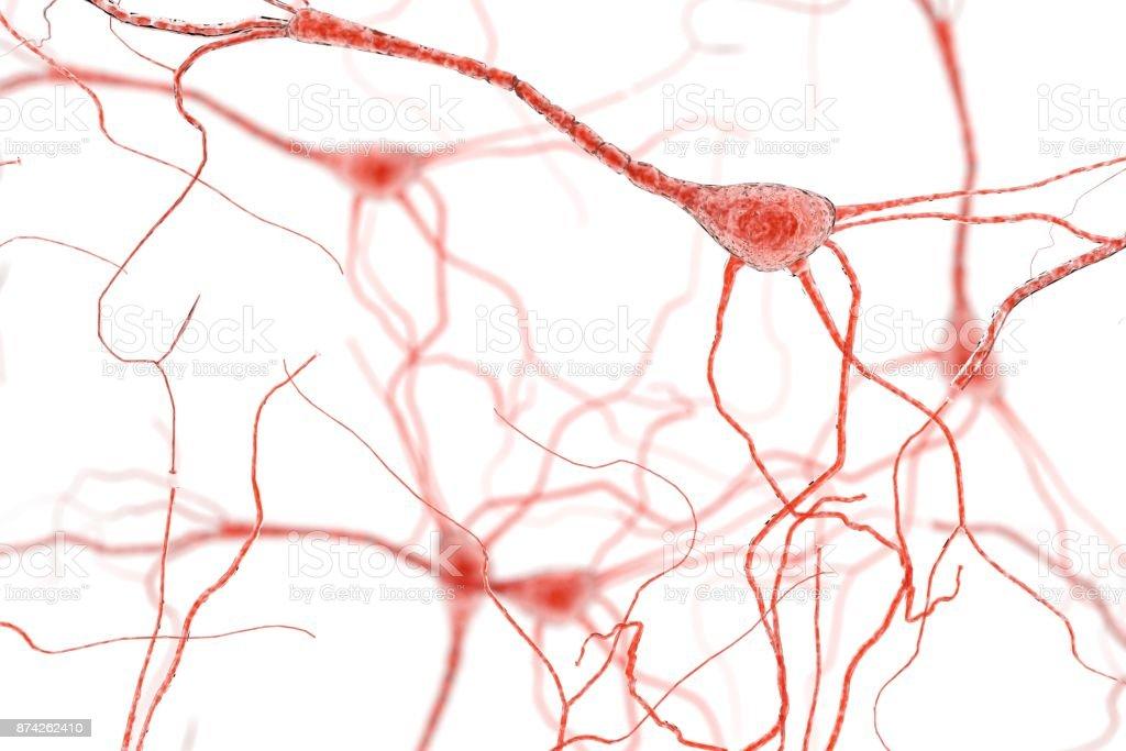 Neuron Cell, Neurons on white background stock photo