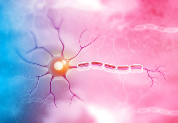 Neuron cell on medical background stock photo