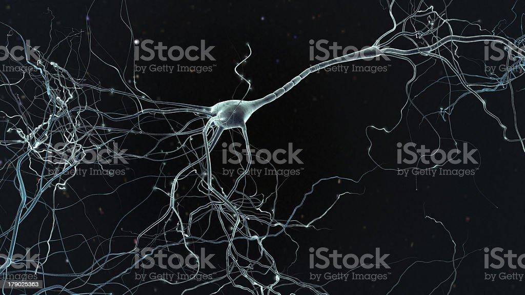 neuron cell stock photo