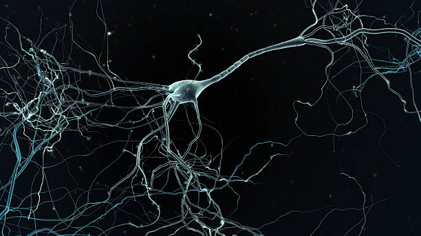 neuron cell Neuron space, concept of neurons and nervous system nerve fiber stock pictures, royalty-free photos & images