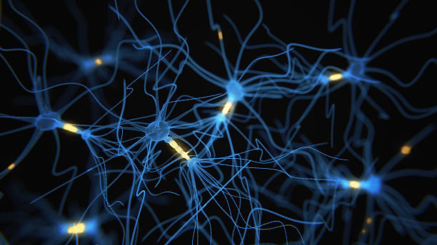 Neuron cells network on black Neuron cells network - 3d rendered image on black background neurons stock pictures, royalty-free photos & images