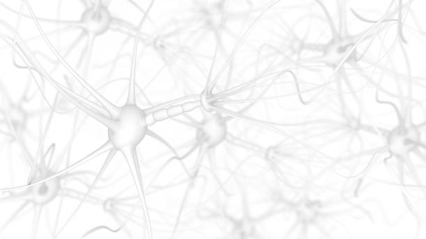 Neuron cells on white Neuron cells - 3d rendered image of Neuron cell network on white background.  Conceptual medical image.  Healthcare concept. autoreceptor stock pictures, royalty-free photos & images