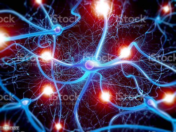 Neuron cells picture id181071277?b=1&k=6&m=181071277&s=612x612&h=ppcdzk ovuuroxq9t0rxcflhs82ht0zrgv6jxxiuzhk=
