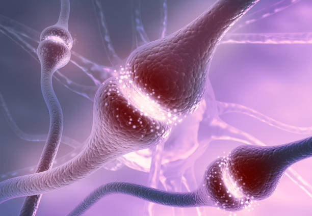 Neuron cells sending electrical chemical signals stock photo