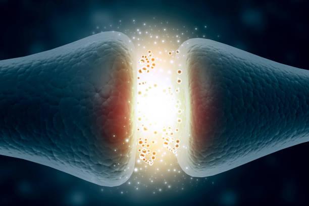 Neuron cells sending  signals stock photo