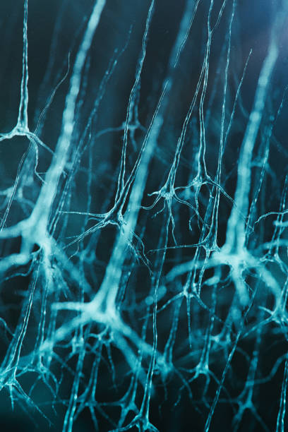 Neuron cells system Neuron cells system - 3d rendered vertical  image of neurons cells. Hologram view  interconnected neurons cells with electrical pulses. Conceptual medical image. Healthcare concept. motor neuron stock pictures, royalty-free photos & images