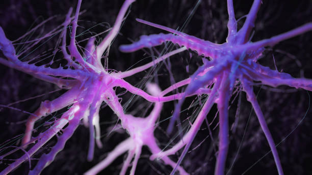 Neuron cells system Neuron cells system - 3d rendered image of Neuron cell network on black background.  Conceptual medical image.  Healthcare concept. autoreceptor stock pictures, royalty-free photos & images