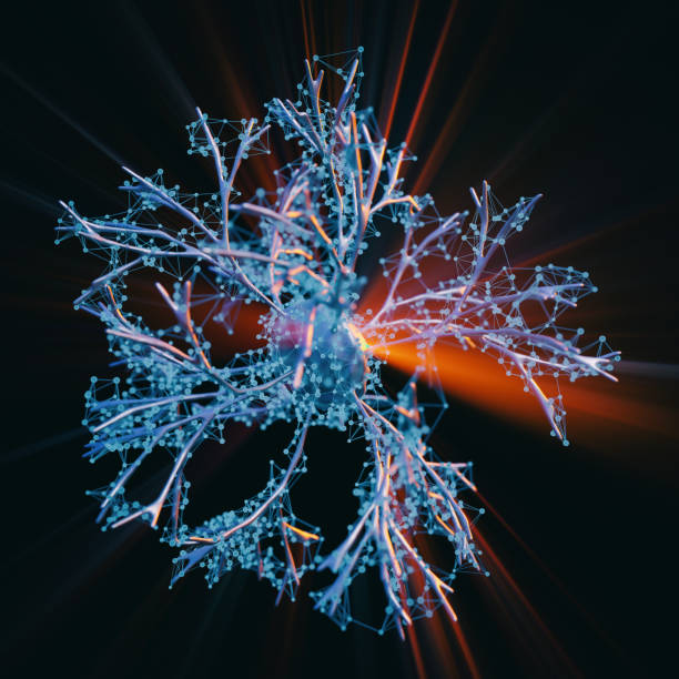 neuron zellen system - axon stock-fotos und bilder