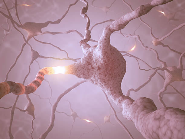 Neuron Concept Inside the brain. Concept of neurons and nervous system. autoreceptor stock pictures, royalty-free photos & images