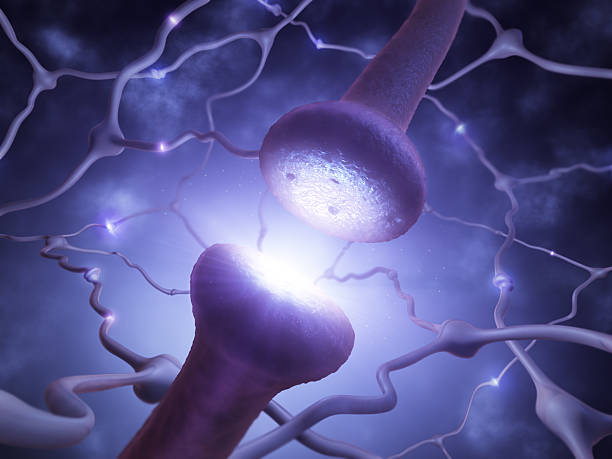 Neuron network Closeup of the synapse transmitting signal along neuron network. neurotransmitter stock pictures, royalty-free photos & images