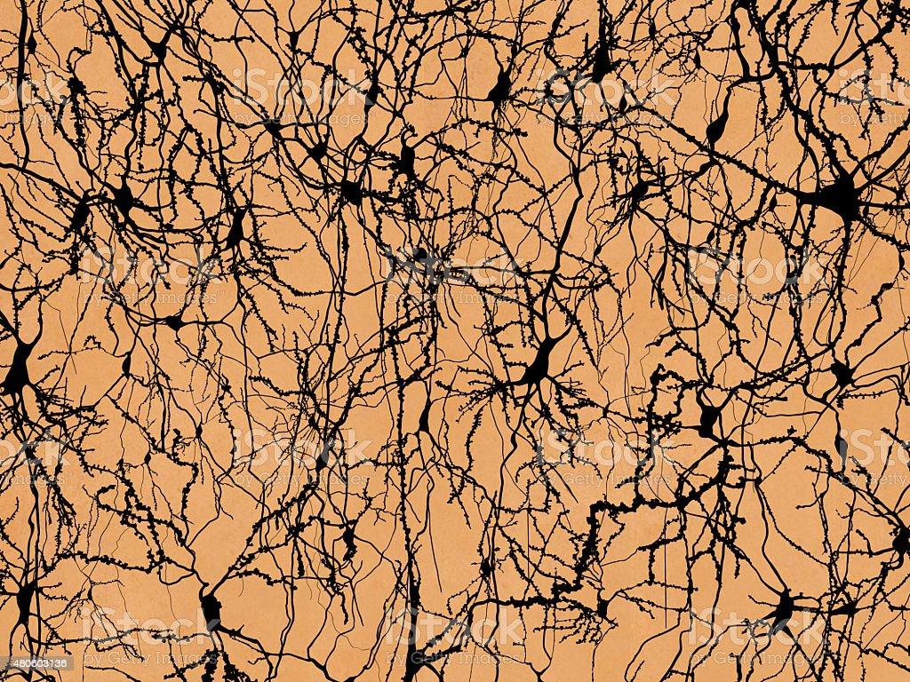 Neuron network stock photo