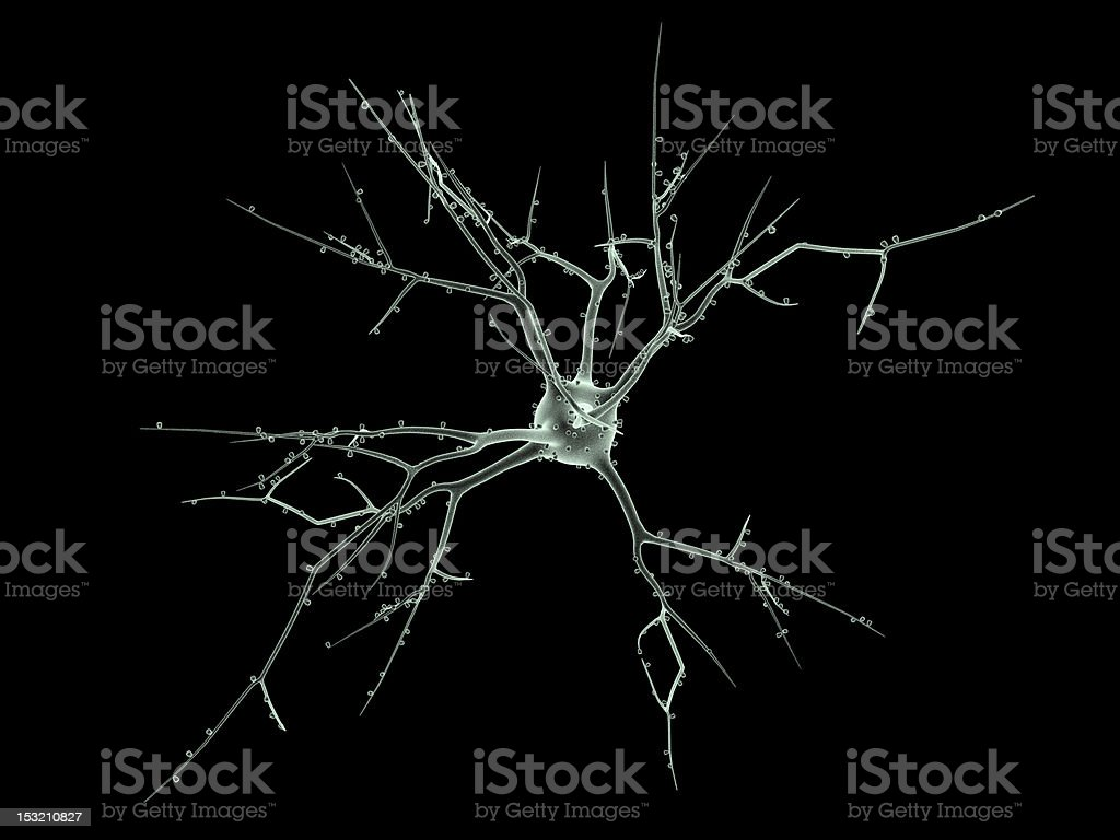 Neuron stock photo