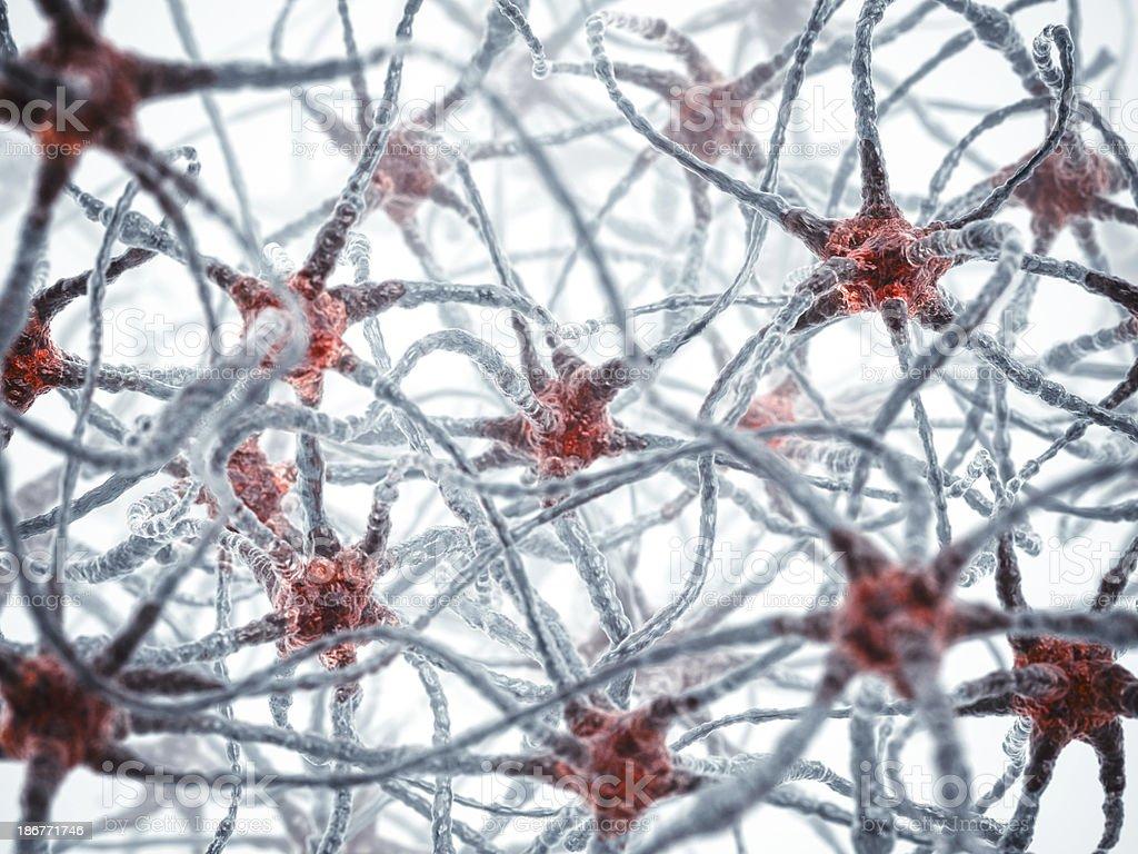 Neuron royalty-free stock photo
