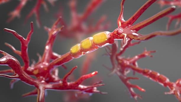 nerzenzelle system illustrationen - axon stock-fotos und bilder