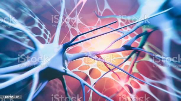 Neuron system picture id1152856121?b=1&k=6&m=1152856121&s=612x612&h=xo0gxbzfavg9df4zatpnsdi gmffaaov9una1p2xrd8=