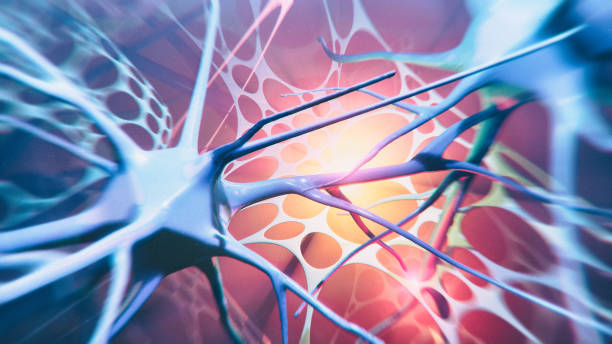 Neuron system Neuron cells system - 3d rendered image of Neuron cell network on black background. View  interconnected neurons cells with electrical pulses. Conceptual medical image.    Healthcare concept. als stock pictures, royalty-free photos & images