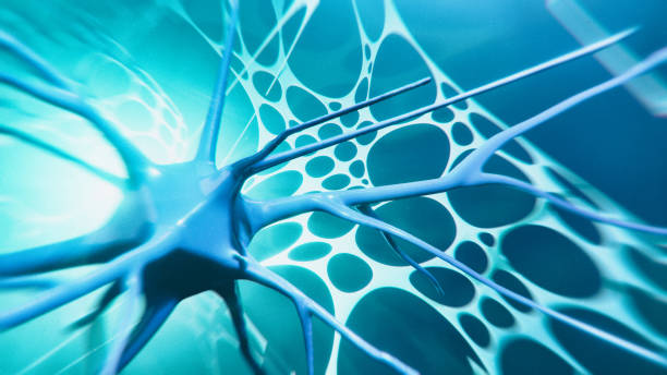 Neuron system Neuron cells system - 3d rendered image of Neuron cell network. Hologram view. Neuroscience concept. neuroscience abstract stock pictures, royalty-free photos & images