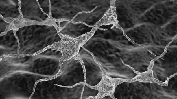 neuronensystem - axon stock-fotos und bilder