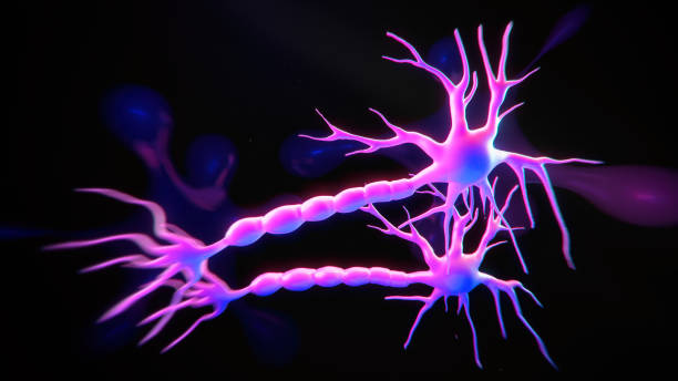 Neuron system Neuron cells system - 3d rendered image of Neuron cell network on black background. Neon colored view  interconnected neurons cells with electrical pulses. Conceptual medical image.  Glowing synapse.  Healthcare concept. motor neuron stock pictures, royalty-free photos & images