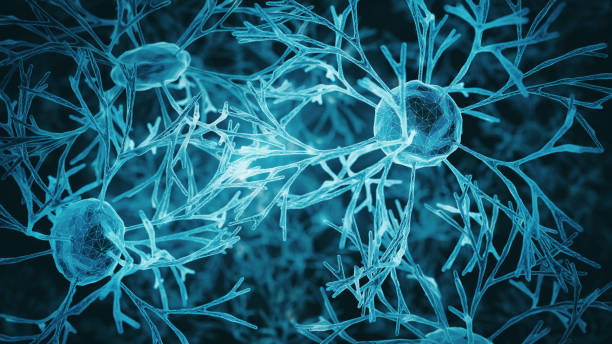 Neuron system Neuron cells system - 3d rendered image of Neuron cell network on black background. Hologram view. axon terminal stock pictures, royalty-free photos & images
