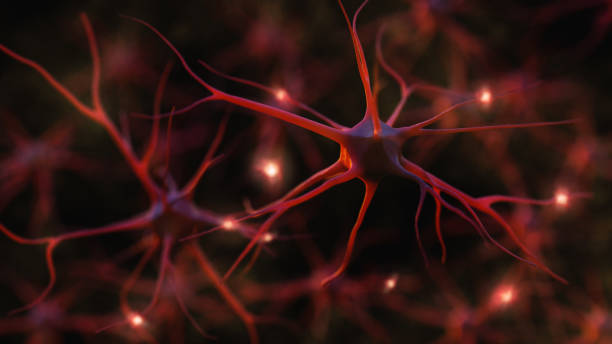 Neuron system Neuron cells system - 3d rendered image of Neuron cell network on black background. Hologram view. neurotransmitter stock pictures, royalty-free photos & images
