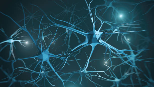Neuron system Neuron cells system - 3d rendered image of Neuron cell network on black background. axon terminal stock pictures, royalty-free photos & images