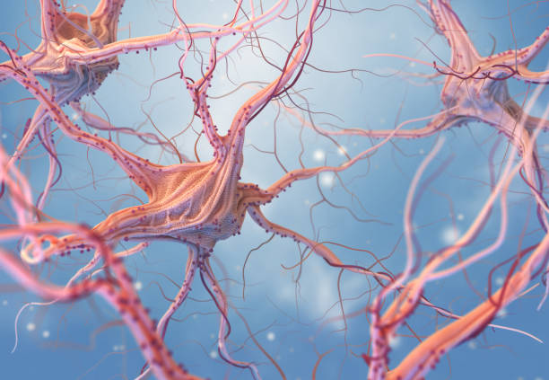 Neurons and nervous system stock photo