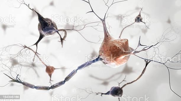 Neurons and nervous system picture id154346186?b=1&k=6&m=154346186&s=612x612&h=pqcg0fecdkjpjwdnmxkbbprt3rdb2baog8q65muoqp8=
